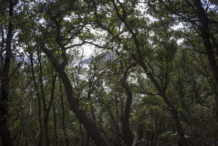日峯大神子公園散策コースから見た海