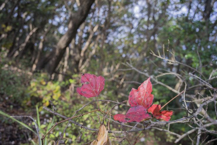 日峯大神子公園散策コースの紅葉