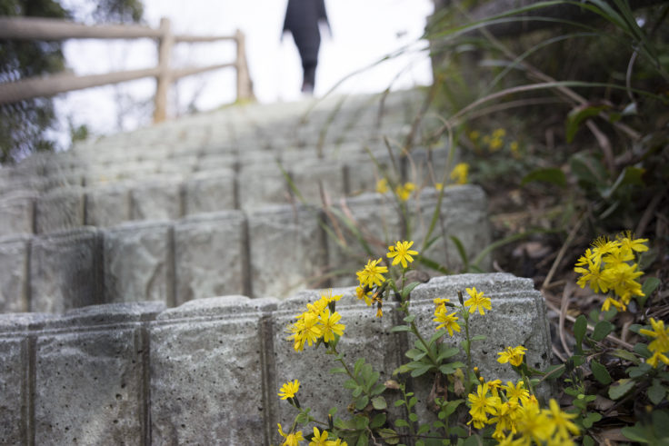 日峯大神子広域公園東望の広場階段