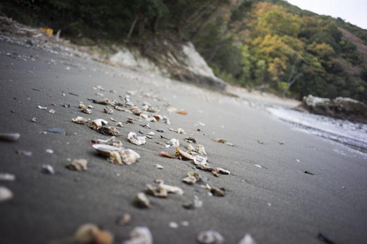 日峯大神子広域公園海岸の貝殻