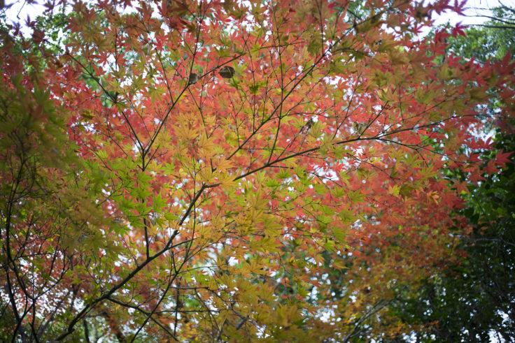 徳島市中央公園の紅葉
