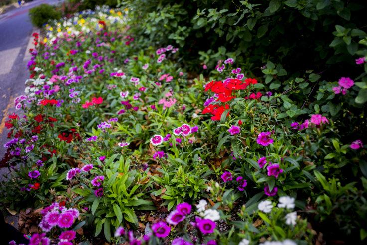 徳島中央公園の花壇