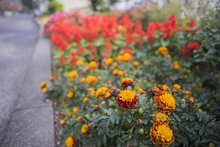 徳島中央公園の花2