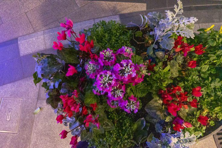 超広角レンズで花を撮影