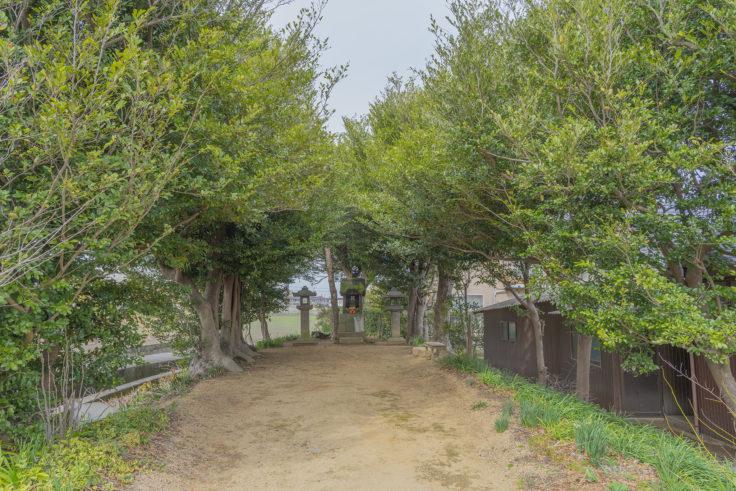 香川の保存木「十蓮坊のイスノキ群」