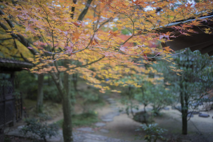 栗林公園の紅葉7