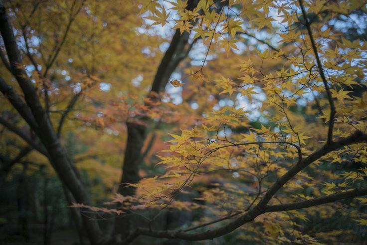 栗林公園の紅葉8