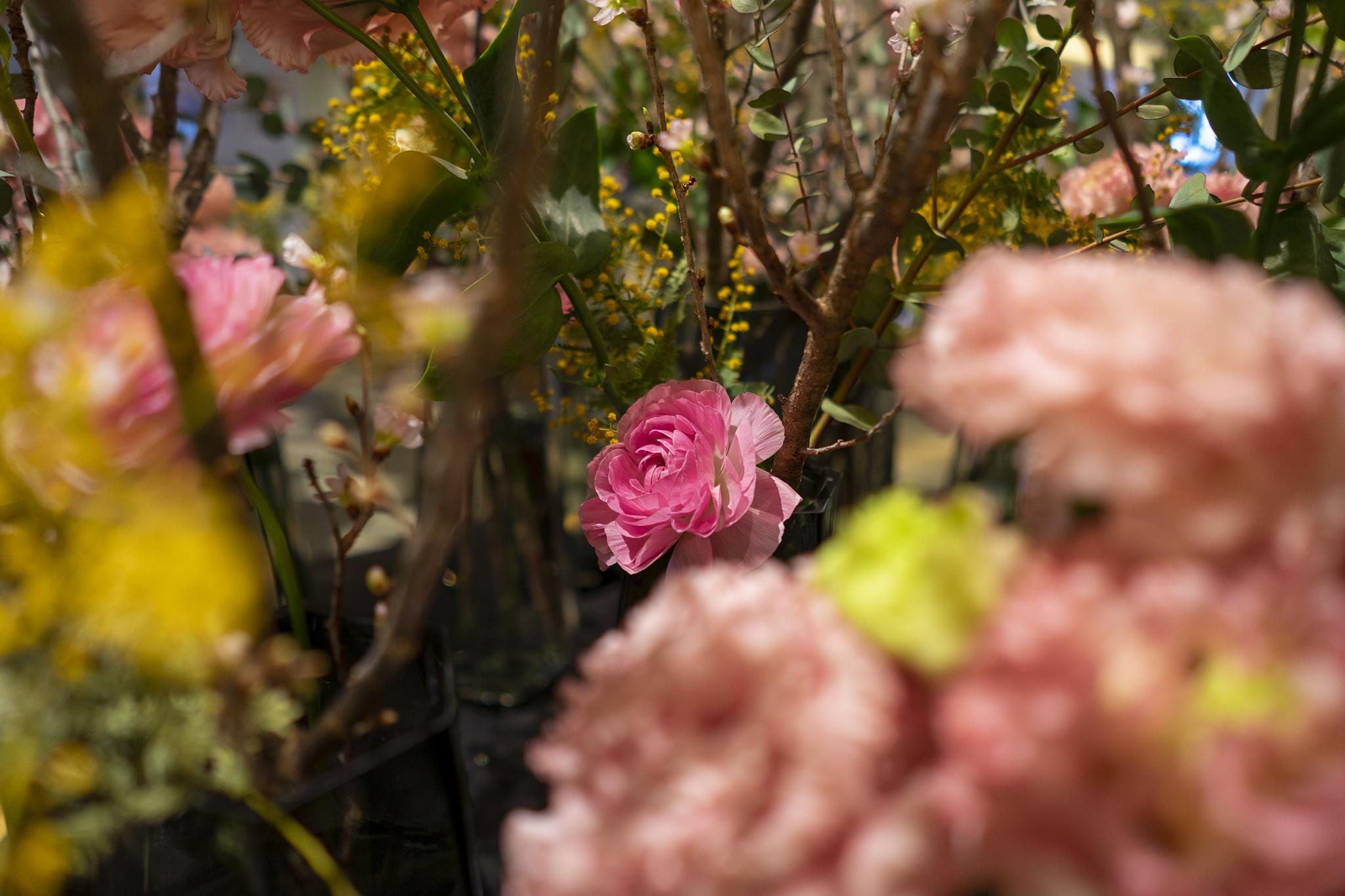 トルコキキョウの花言葉と誕生花