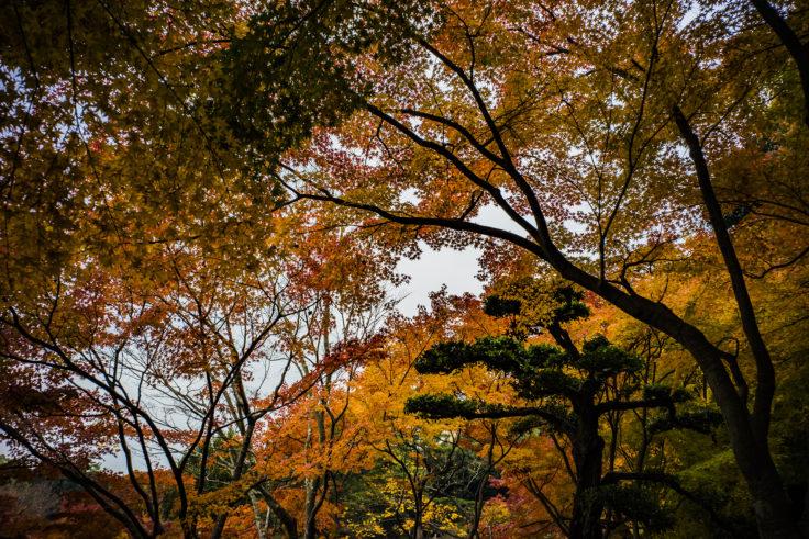 栗林公園の紅葉11