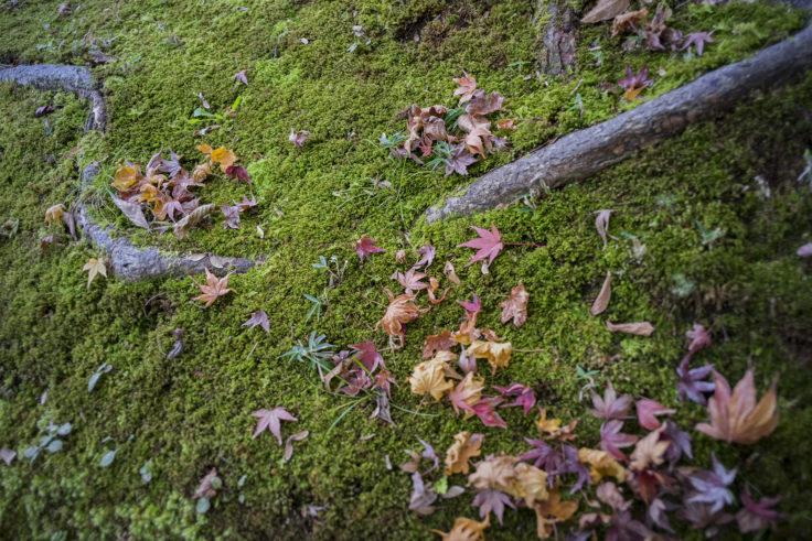 栗林公園の紅葉12