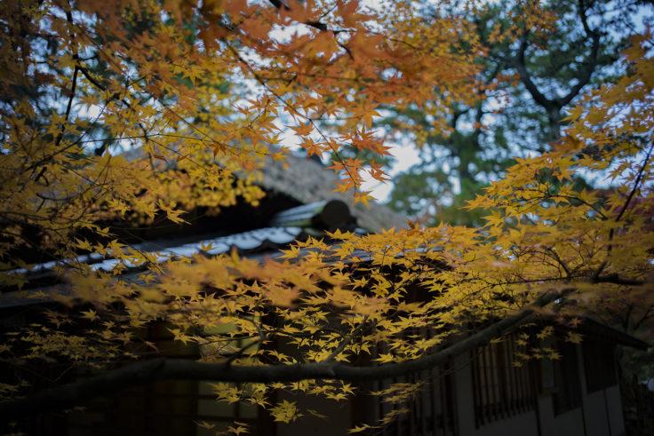 栗林公園の紅葉16