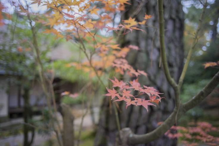 栗林公園の紅葉17