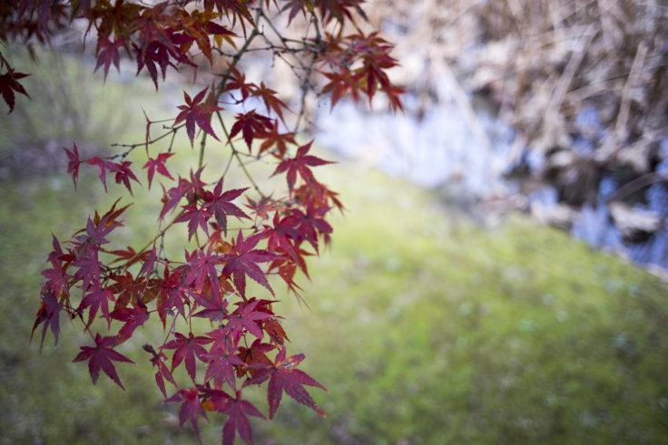栗林公園の紅葉18