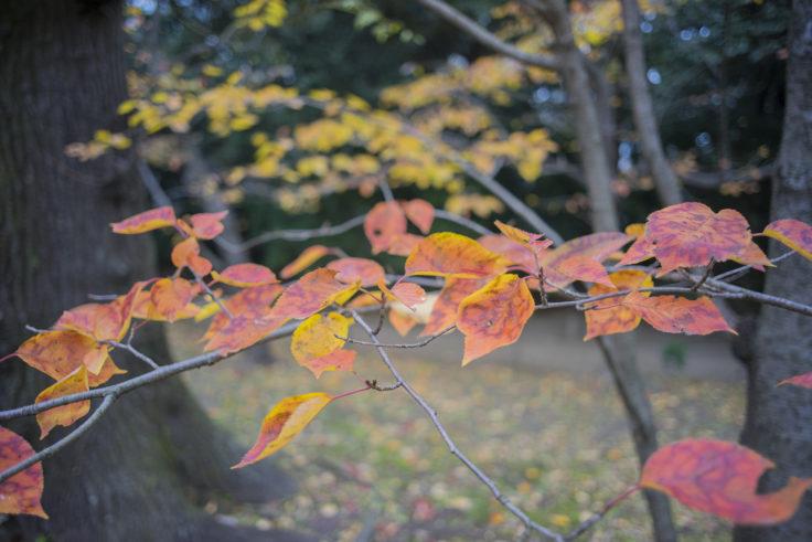 栗林公園の紅葉19