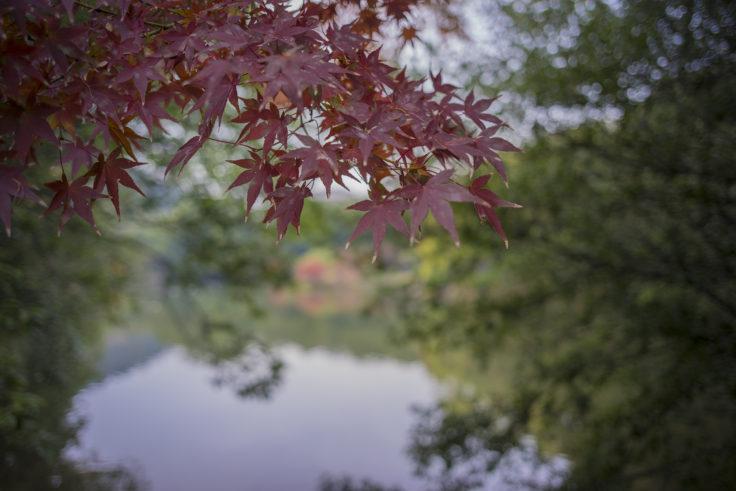 栗林公園の紅葉20