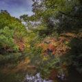 栗林公園の紅葉~紅葉ライトアップ