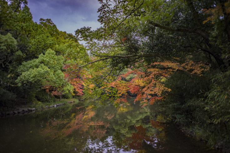 栗林公園の紅葉21