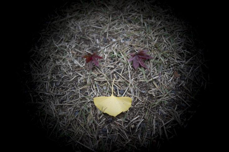 栗林公園の紅葉22