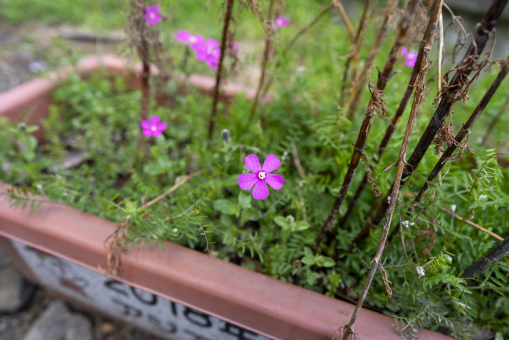 鳴門市庁舎に咲く花