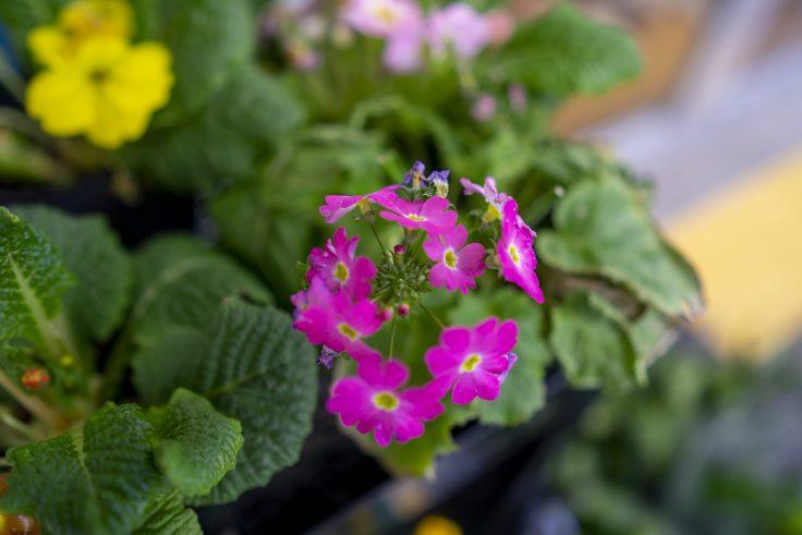 不明の花2