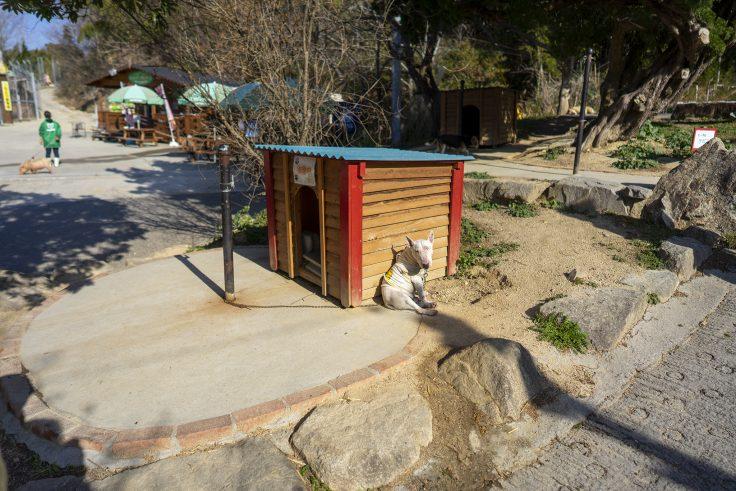 しろとり動物園のブルテリア