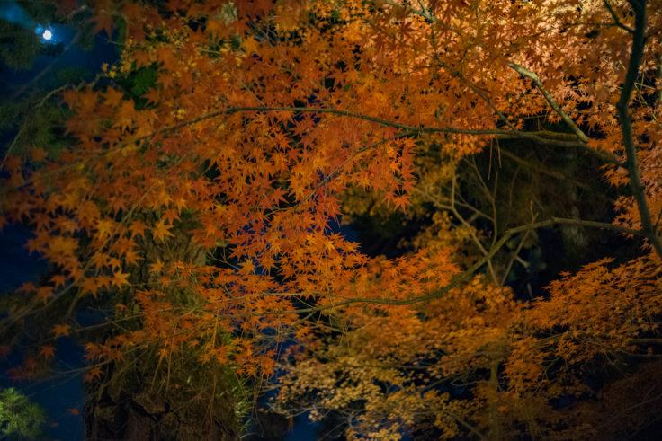 栗林公園の紅葉ライトアップ