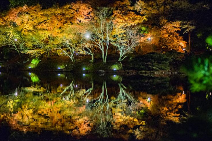 栗林公園の紅葉ライトアップ1