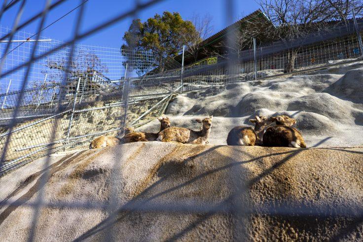 しろとり動物園のシカたち