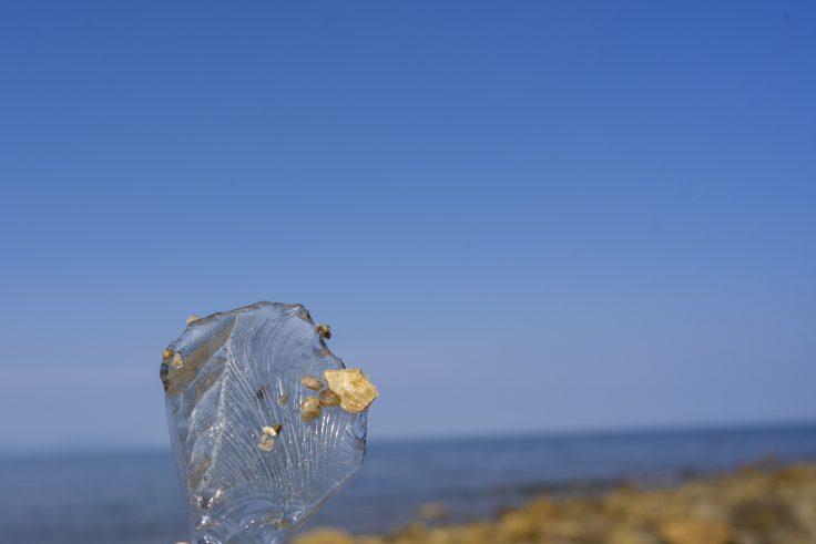 田の浦海岸で拾ったガラス