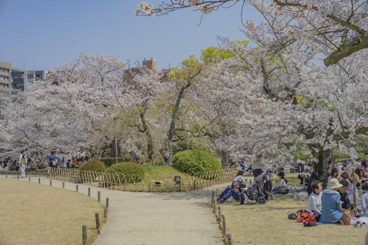 花見客でにぎわう栗林公園の桜