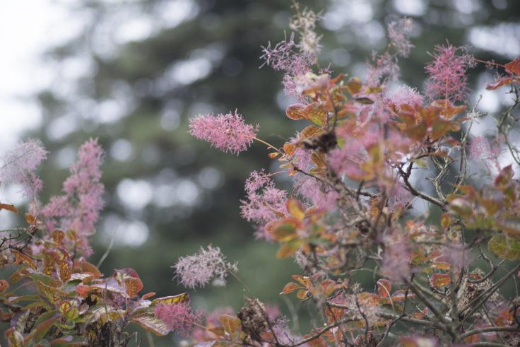 半田山植物園の木