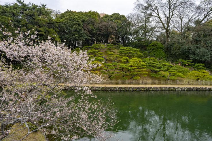 栗林公園の桜と飛来峰
