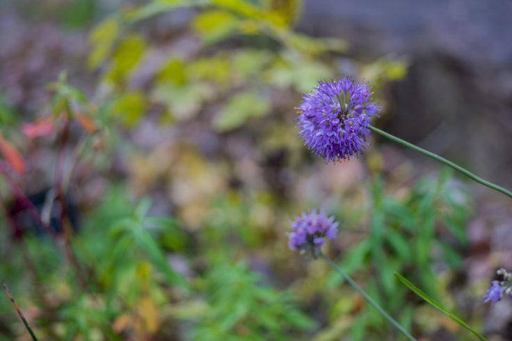半田山植物園の花