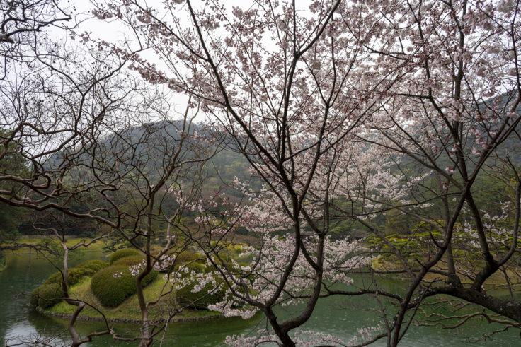 栗林公園南湖の桜