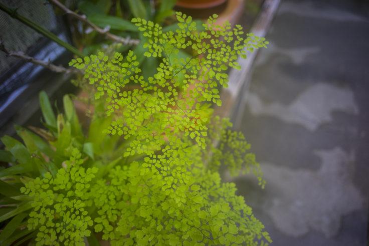 半田山植物園の温室