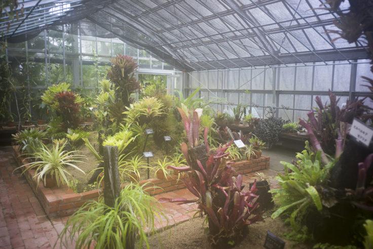 半田山植物園の温室1