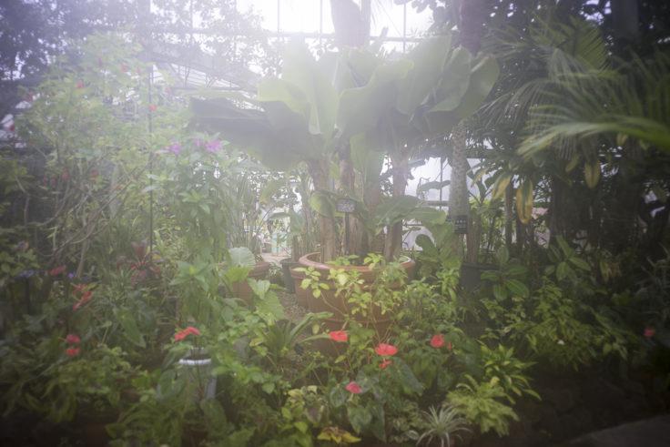 半田山植物園の温室2