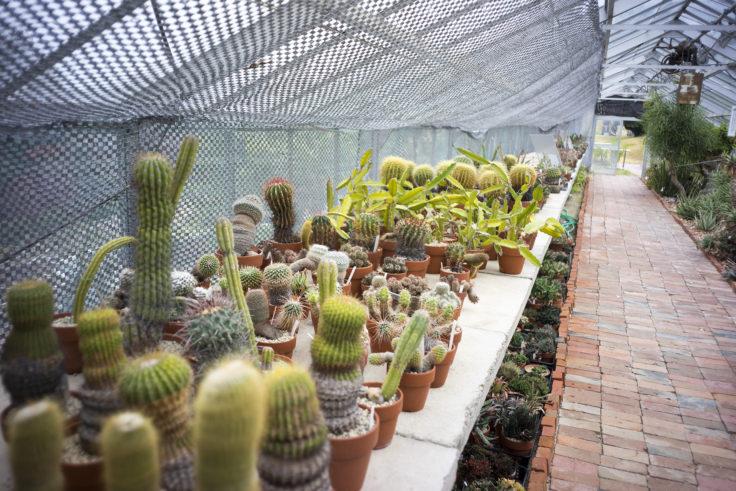 半田山植物園のサボテン2