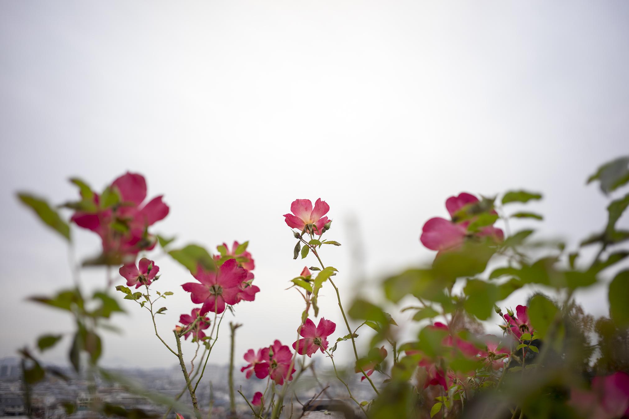 岡山市『半田山植物園』の秋に咲く花たち