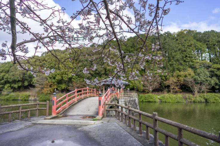亀鶴公園の亀島へ