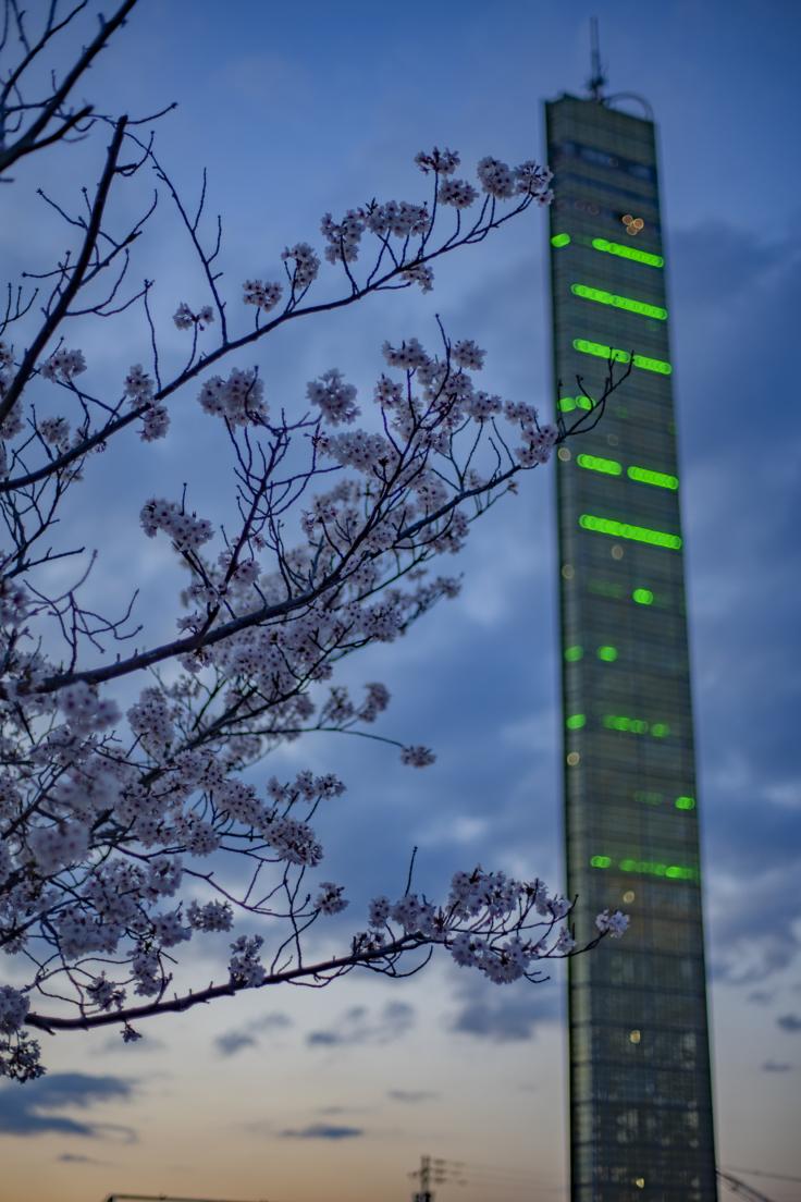 ゴールドタワーと桜