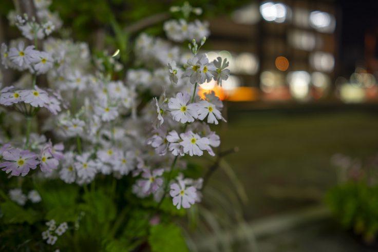 不明の花3