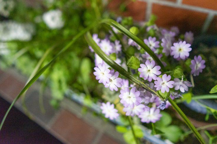 不明の花7