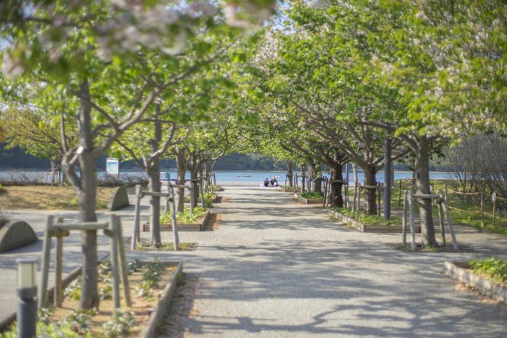 鳴門ウチノ海総合公園の道