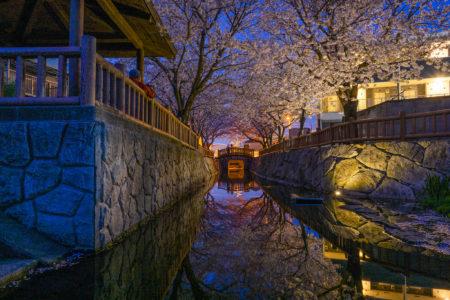 鹿の井出水の夜桜