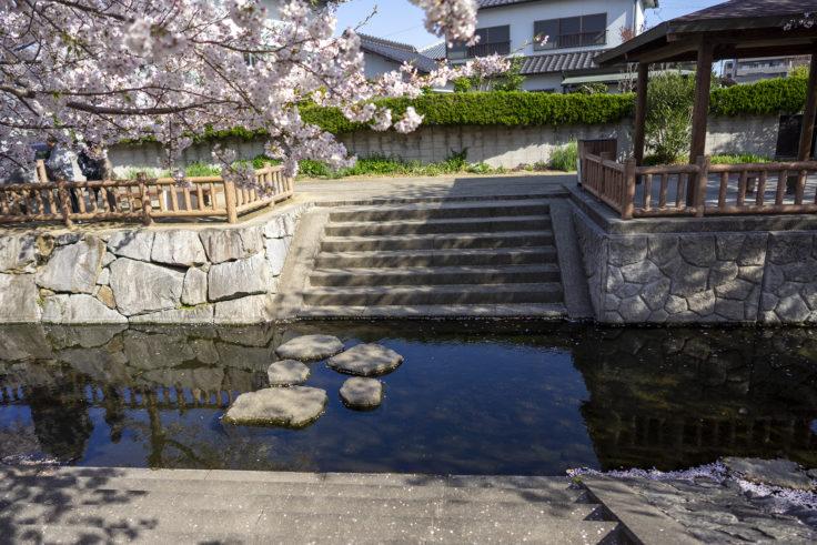 鹿の井出水の桜リフレクション撮影スポット