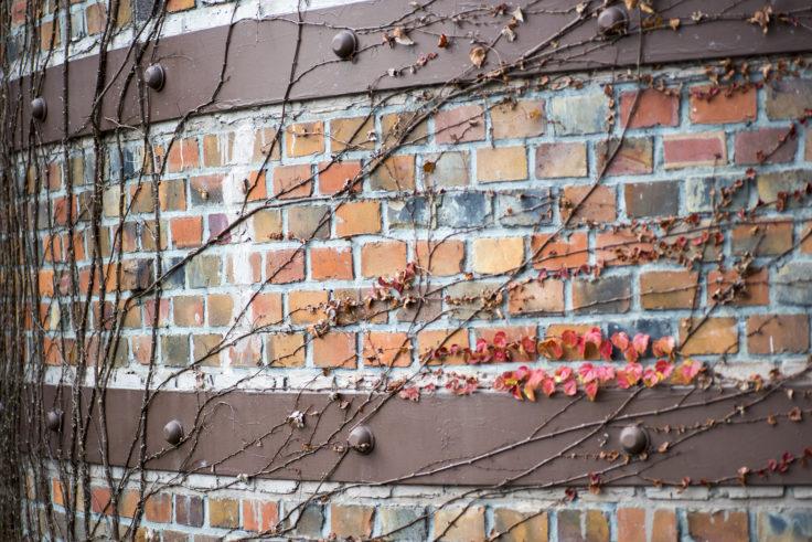姫路市立水族館の紅葉する蔦