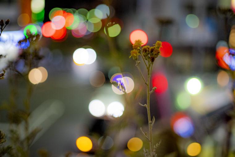 玉ボケ背景の花