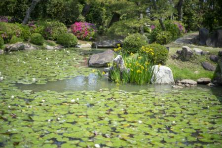 魚楽亭から見た池