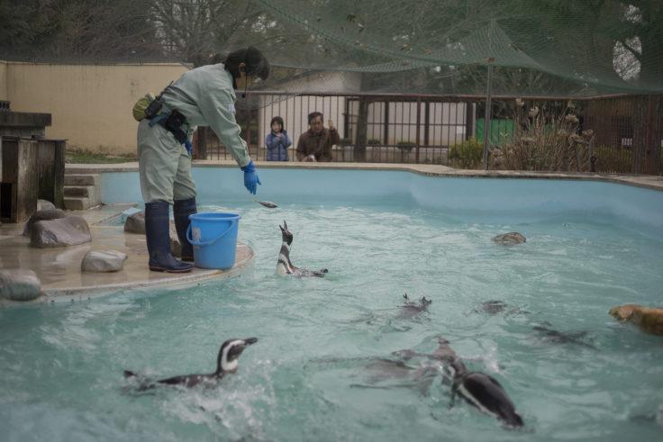 ペンギンのエサやり